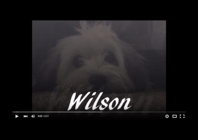 Wilson's First Year